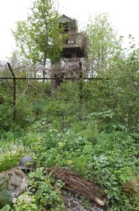 Il giardino di Jihae Hwang al Quiet Time DMZ Forbidden Garden
