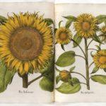 Giardini & libri in mostra alla Bodmer di Ginevra